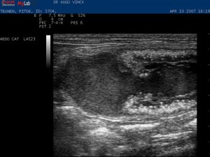 ml40vet_Feline_abd_amniotic_sac